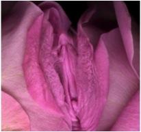 Cicle de Tallers de Sexualitat Femenina Conscient